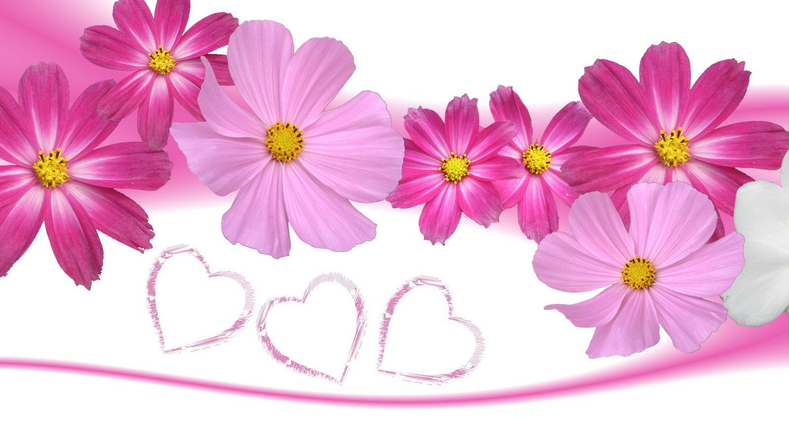 Pink Flower Background Hd Flowers Healthy