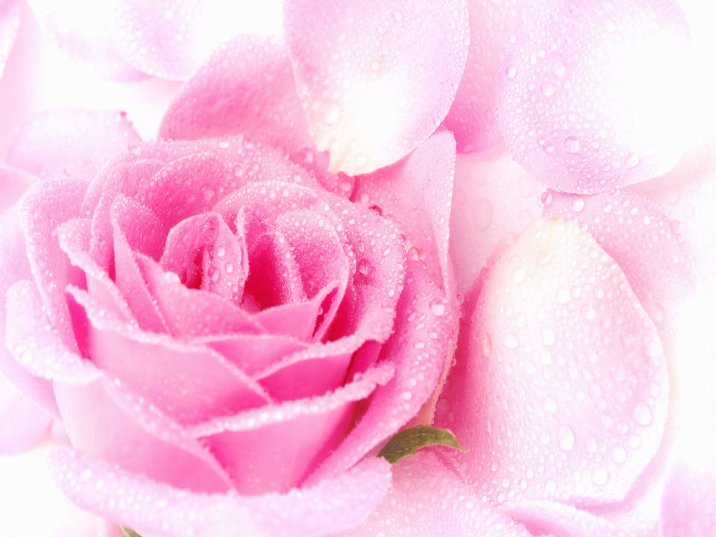 Pink flowers background 5 high resolution wallpaper pink flowers background hd wallpaper mightylinksfo Gallery