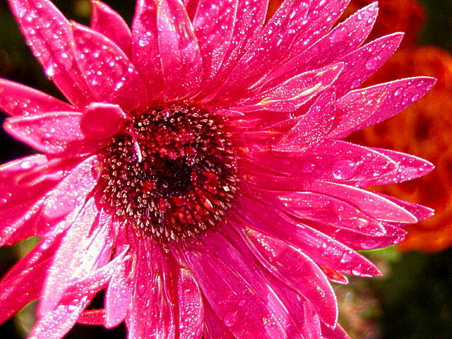 Pink flowers by name 1 wide wallpaper hdflowerwallpaper pink flowers by name free wallpaper mightylinksfo