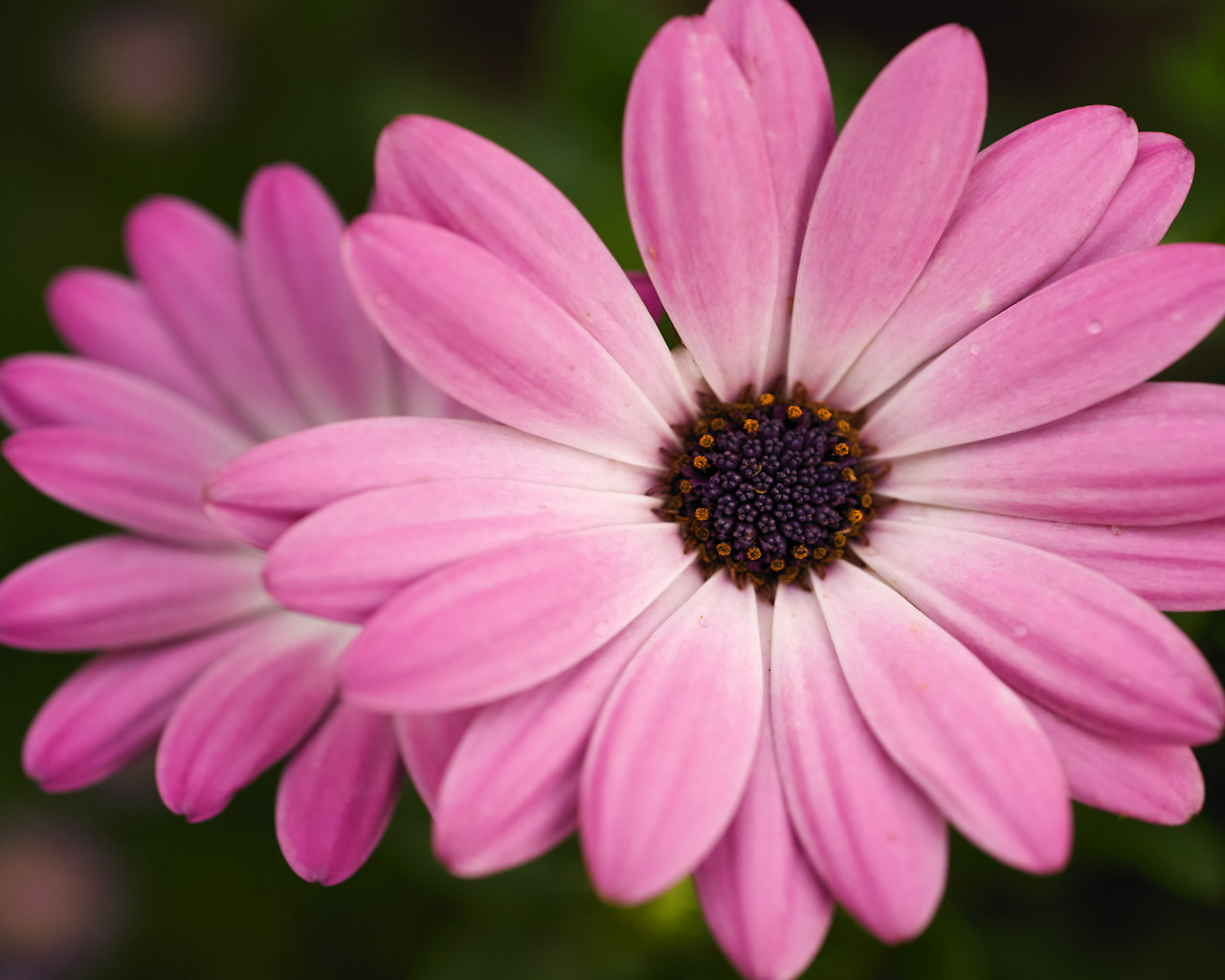 Pink flowers by name 2 background hdflowerwallpaper pink flowers by name hd wallpaper mightylinksfo