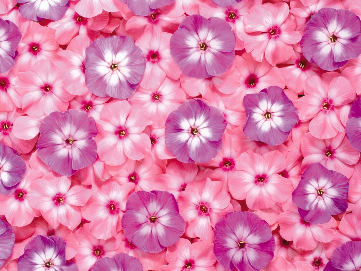 Pink flowers list 14 free wallpaper hdflowerwallpaper pink flowers list free wallpaper mightylinksfo Image collections