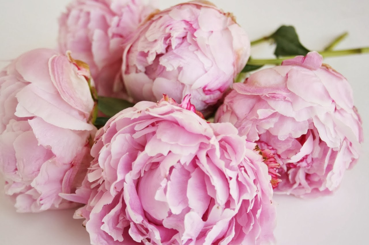 Pink flowers tumblr 17 cool wallpaper hdflowerwallpaper pink flowers tumblr hd wallpaper mightylinksfo