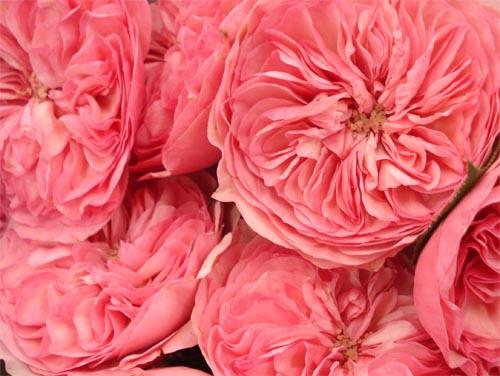 Pink Flowers Tumblr Pink Flowers Tumblr 30...