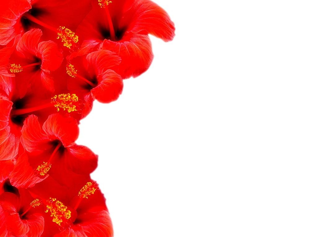 Red Flowers Clipart 17 High Resolution Wallpaper Hdflowerwallpaper
