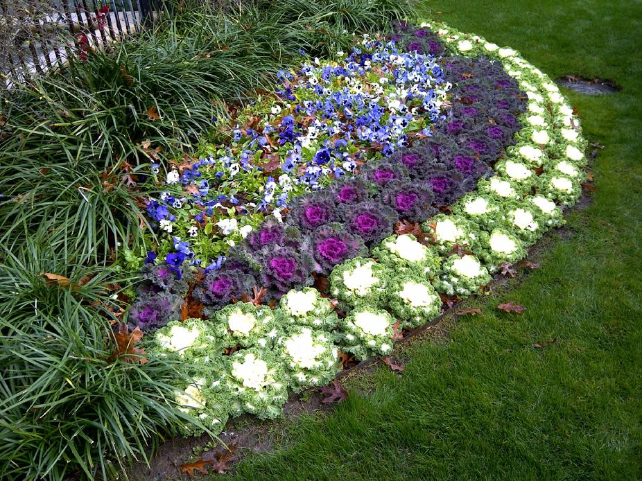 Сочетание цветов клумбе