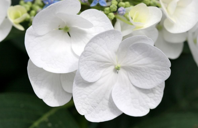 White flowers pictures 9 free hd wallpaper hdflowerwallpaper white flowers pictures free wallpaper mightylinksfo