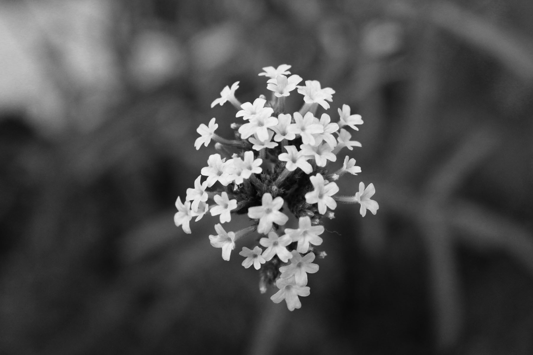 Flower wallpaper tumblr black and white