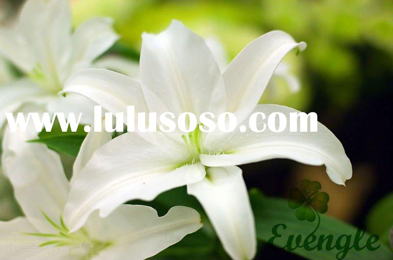 White flowers types 23 cool wallpaper hdflowerwallpaper white flowers types free wallpaper mightylinksfo