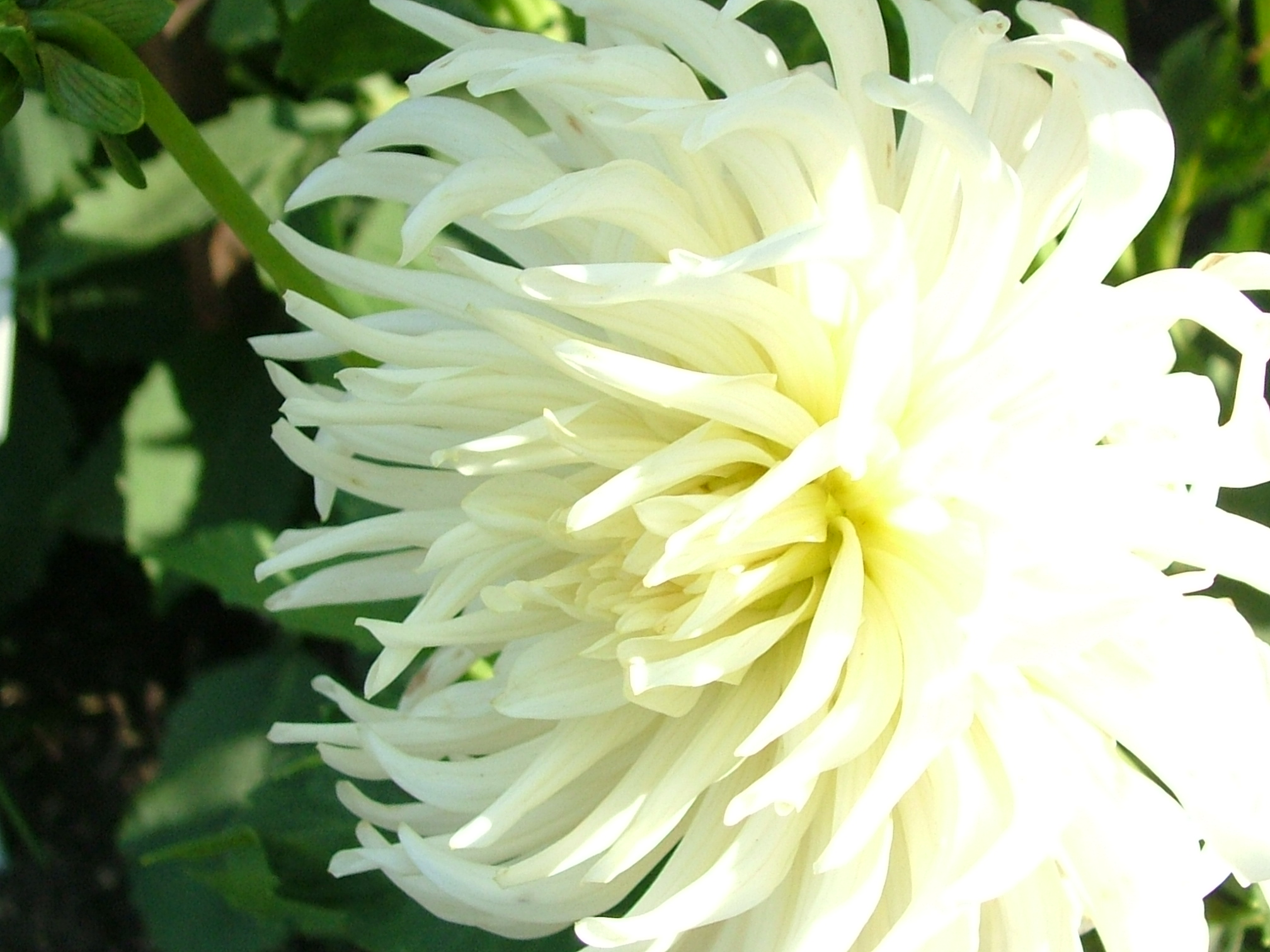 White flowers types 3 wide wallpaper hdflowerwallpaper white flowers types free wallpaper mightylinksfo