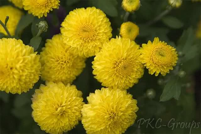 Yellow flowers and their meanings 14 desktop wallpaper yellow flowers and their meanings free wallpaper mightylinksfo