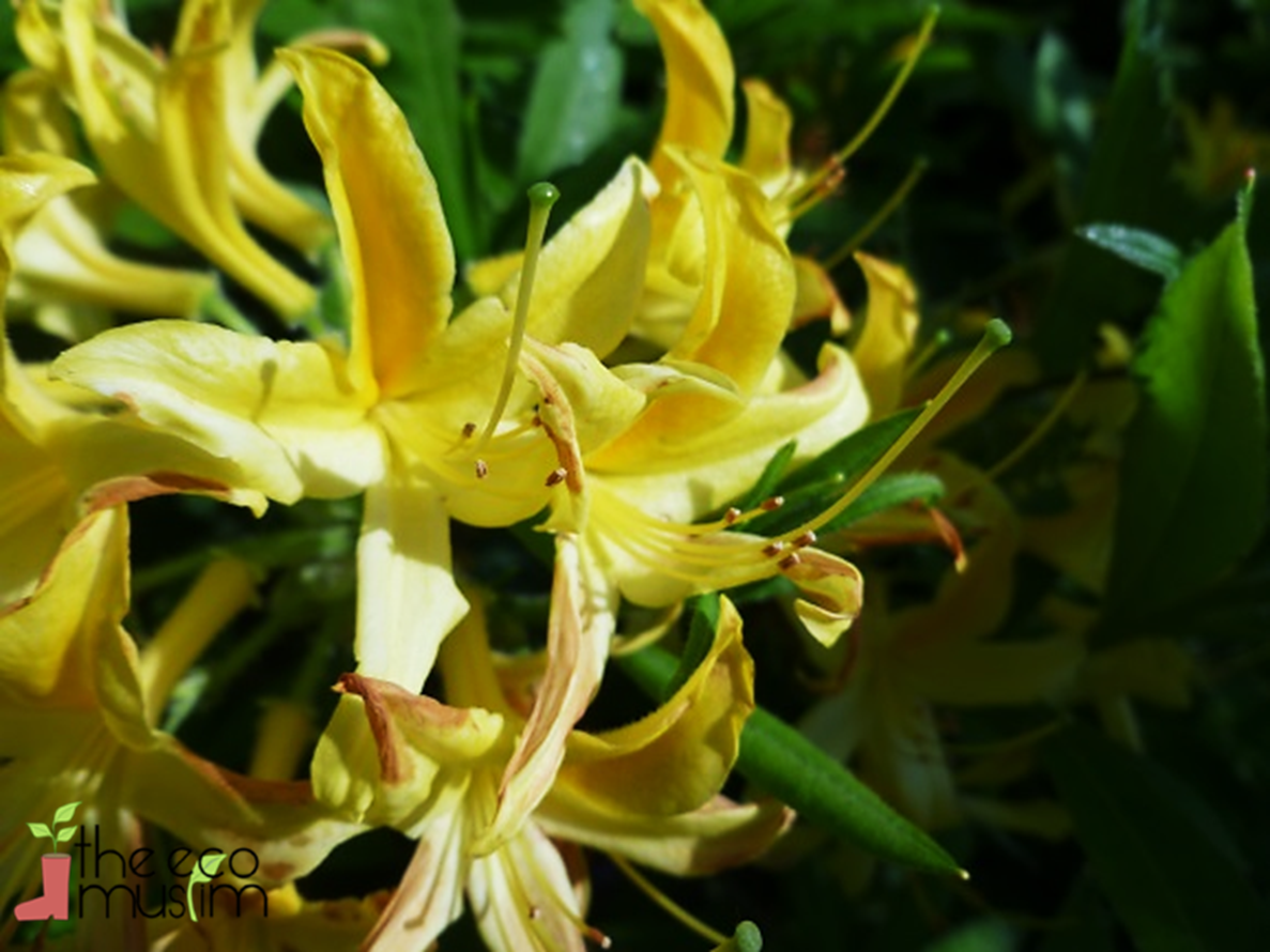 Yellow Flowers And Their Names 18 Cool Hd Wallpaper