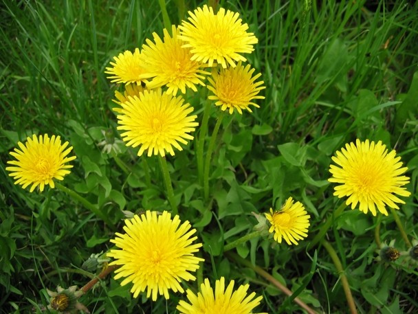 Yellow flowers names and pictures yellow flowers and their names 3 cool wallpaper mightylinksfo