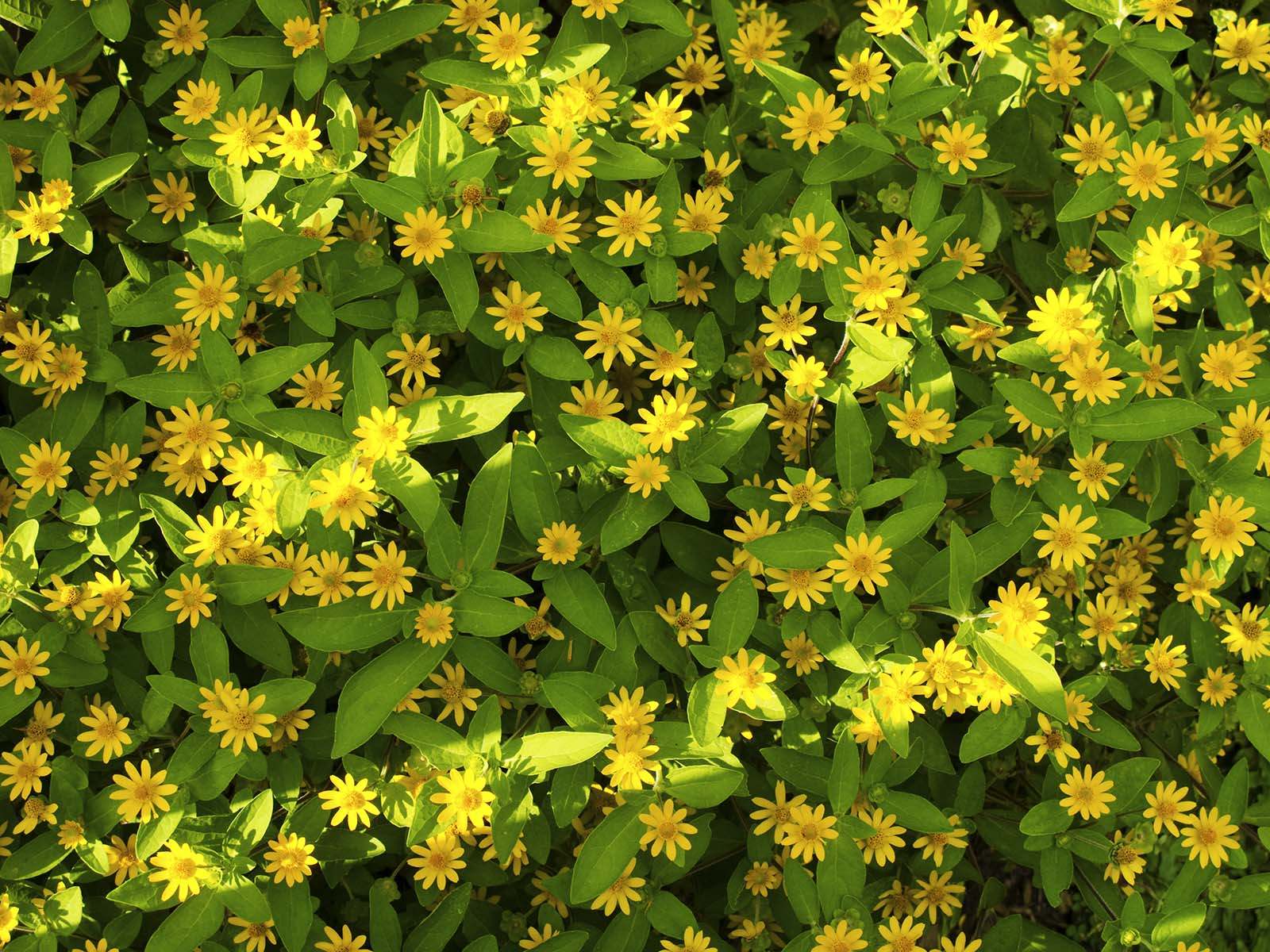 Name Of Small Yellow Flowers Flowers Healthy