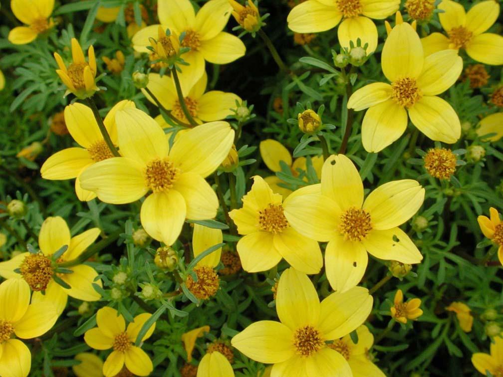 Yellow flowers list 9 cool hd wallpaper hdflowerwallpaper yellow flowers list hd wallpaper mightylinksfo