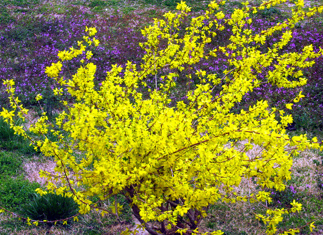 Yellow flowers that bloom in spring 12 background yellow flowers that bloom in spring free wallpaper mightylinksfo