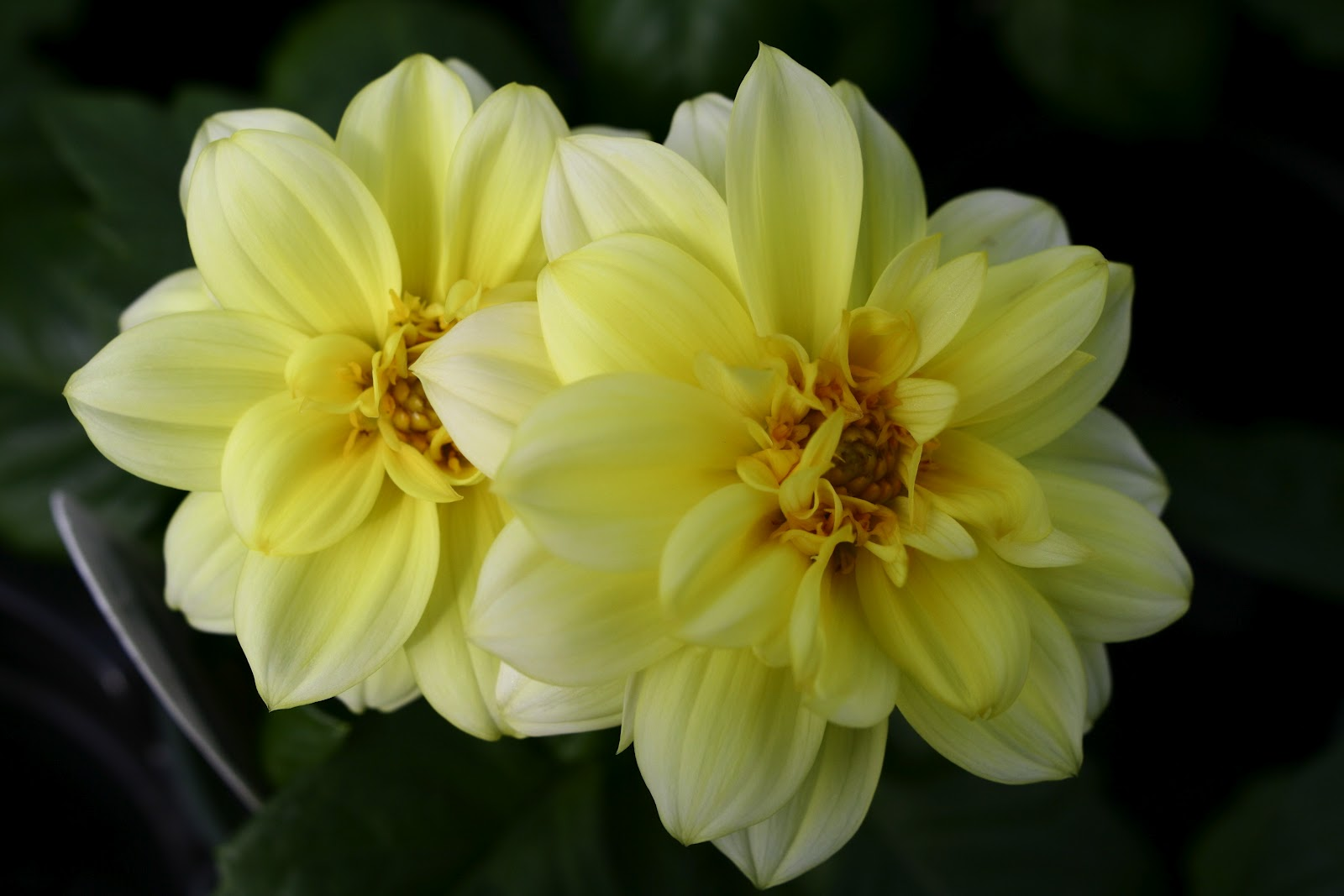 Yellow Flowers That Bloom In Spring 7 High Resolution Wallpaper