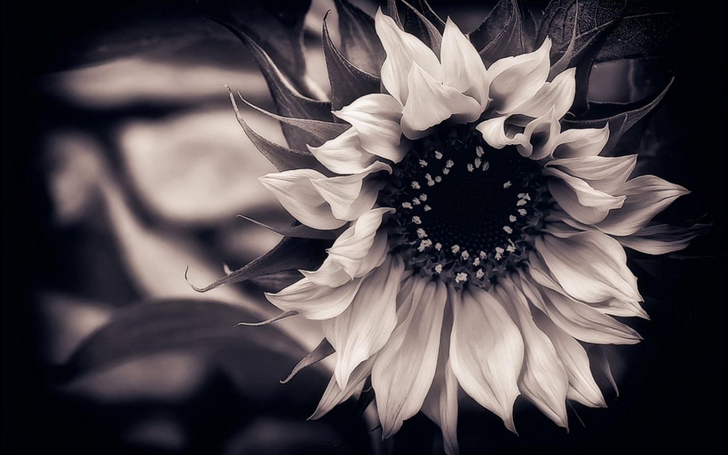 black and white floral wallpaper 16 free hd wallpaper