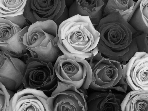 Black and white flower backgrounds 9 background wallpaper black and white flower backgrounds wide wallpaper mightylinksfo