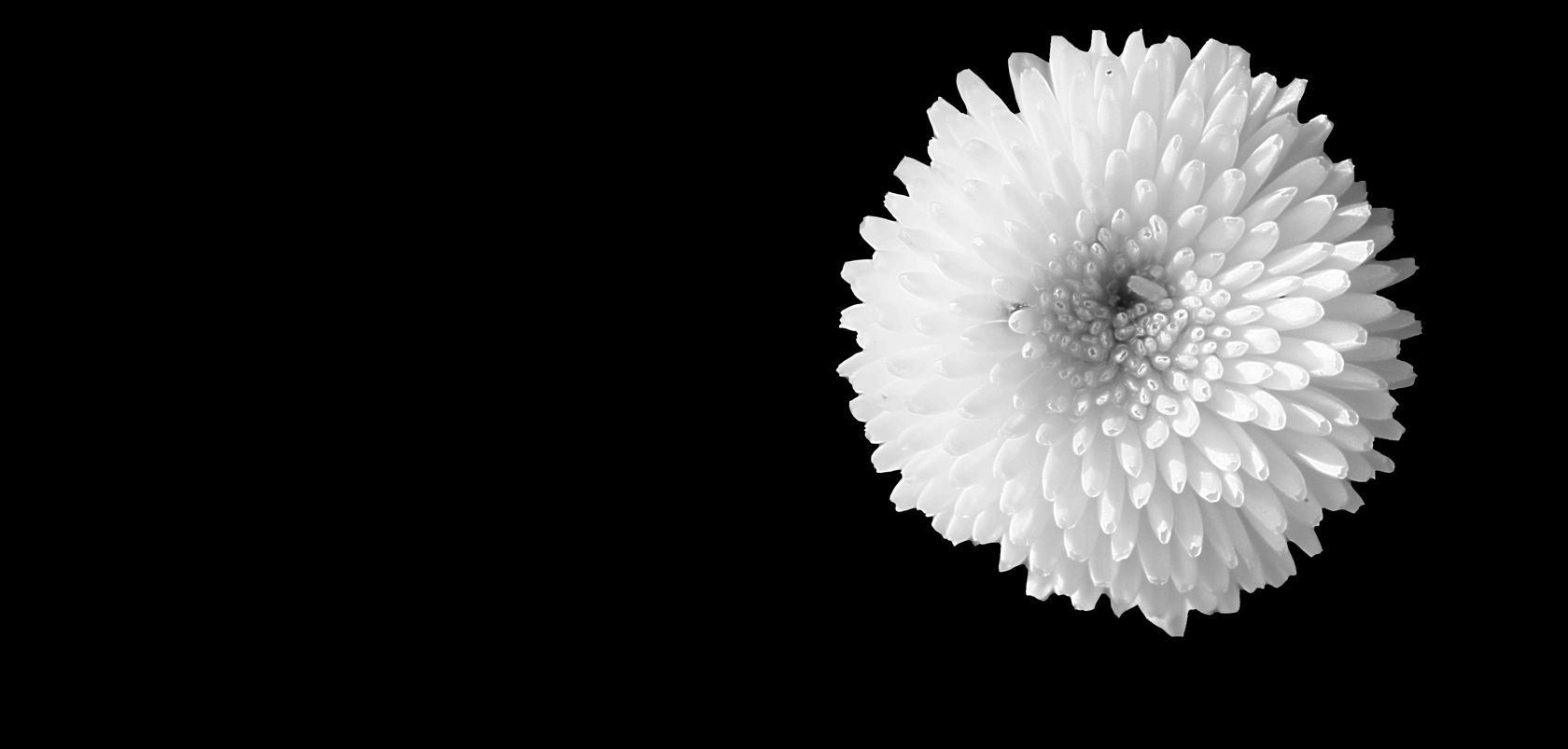 black and white flowers wallpaper 15 hd wallpaper