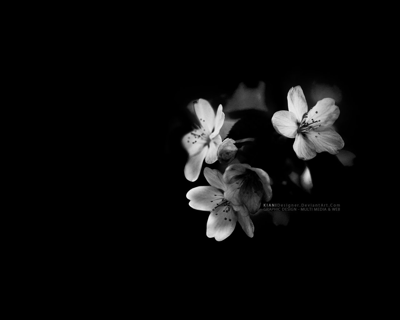 Black And White Flowers Wallpaper 16 Wide Wallpaper