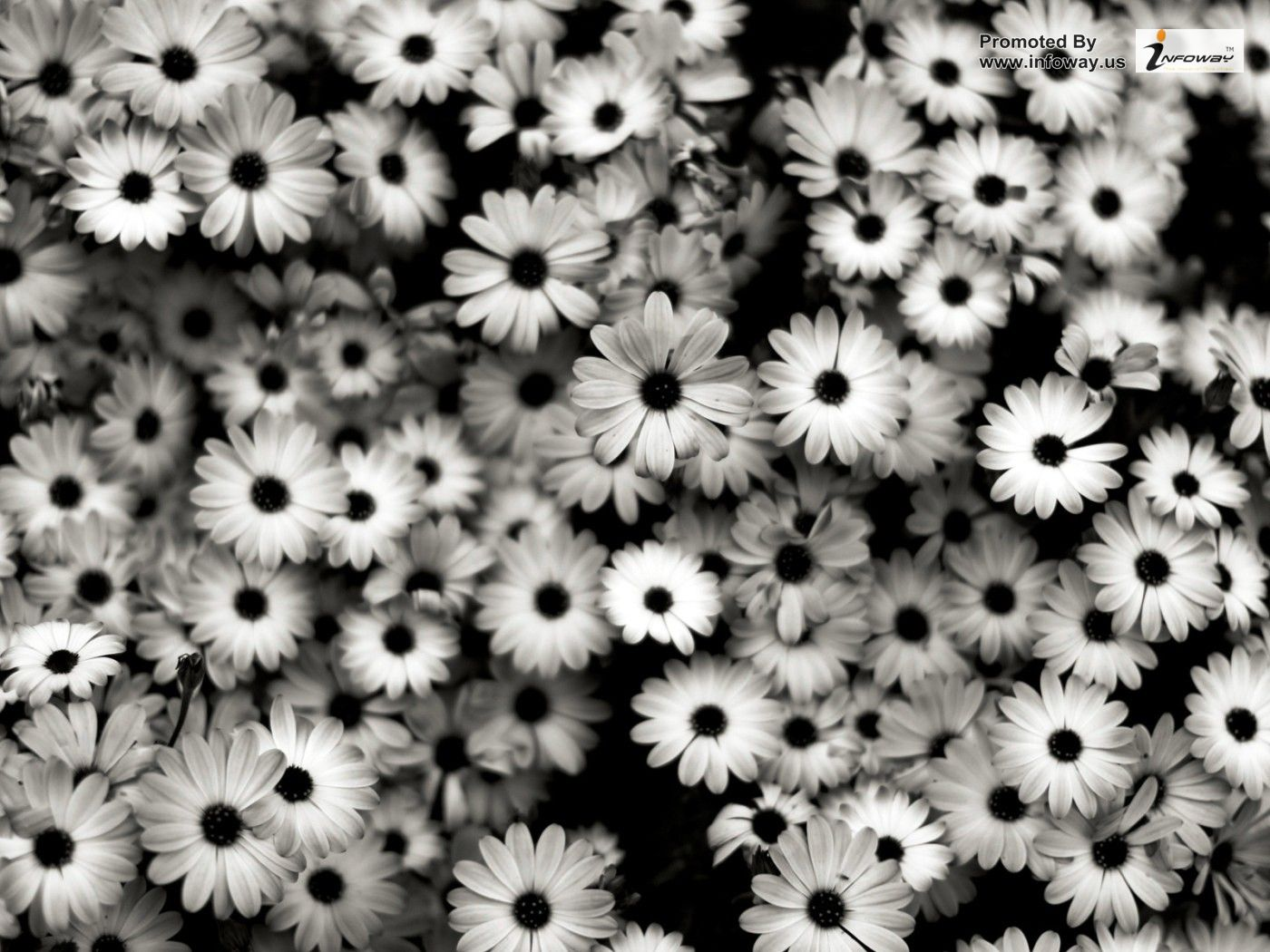 black and white flowers wallpaper 19 cool wallpaper