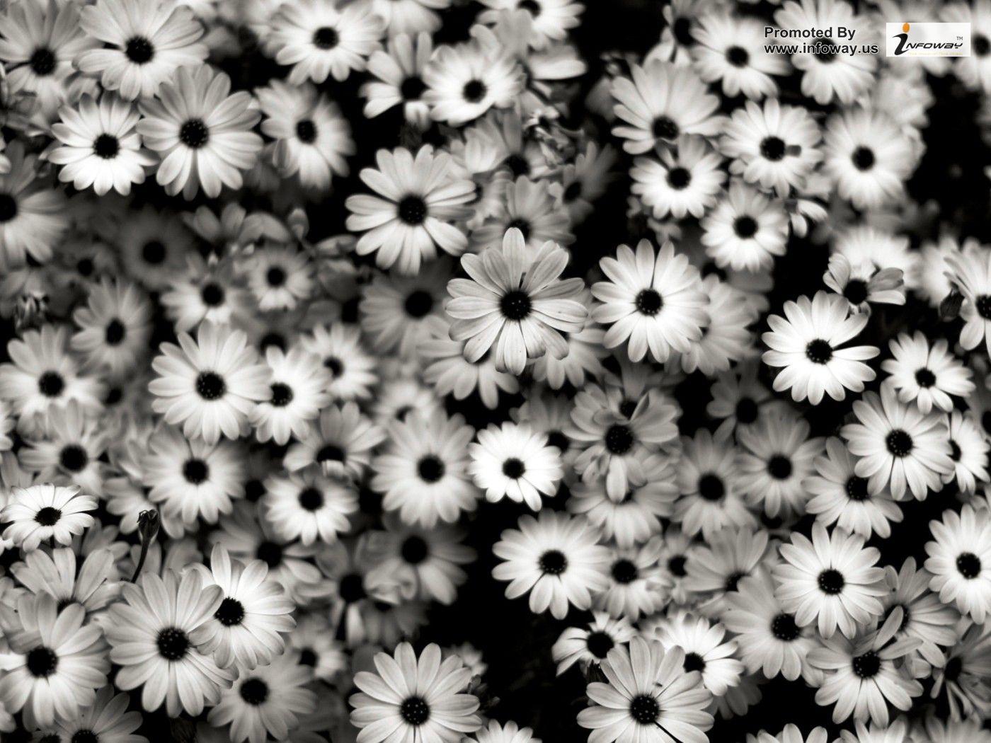 Black And White Flowers Wallpaper 19 Cool Wallpaper HdFlowerWallpaper