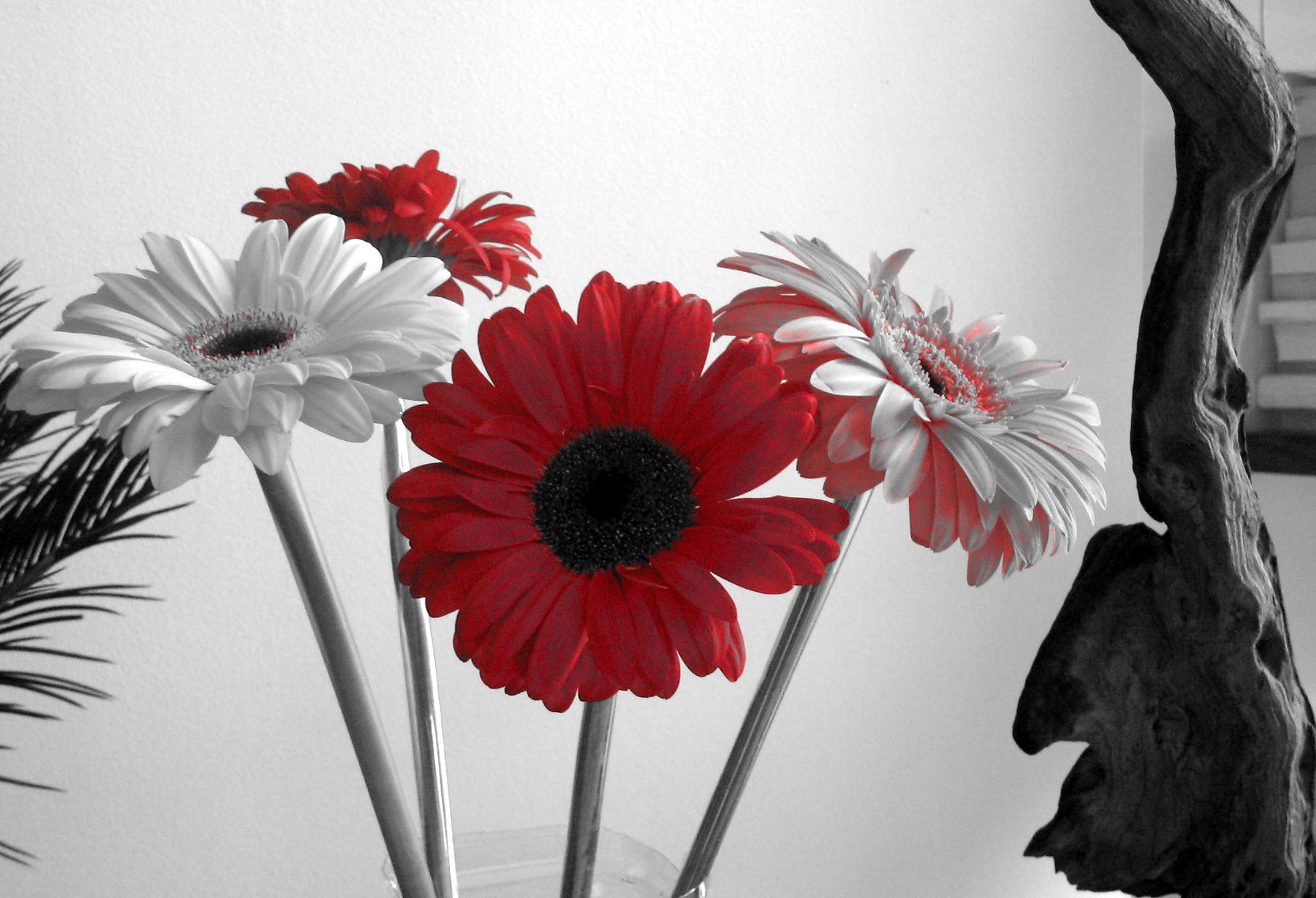 Black And White Flowers Wallpaper 9 Cool Wallpaper