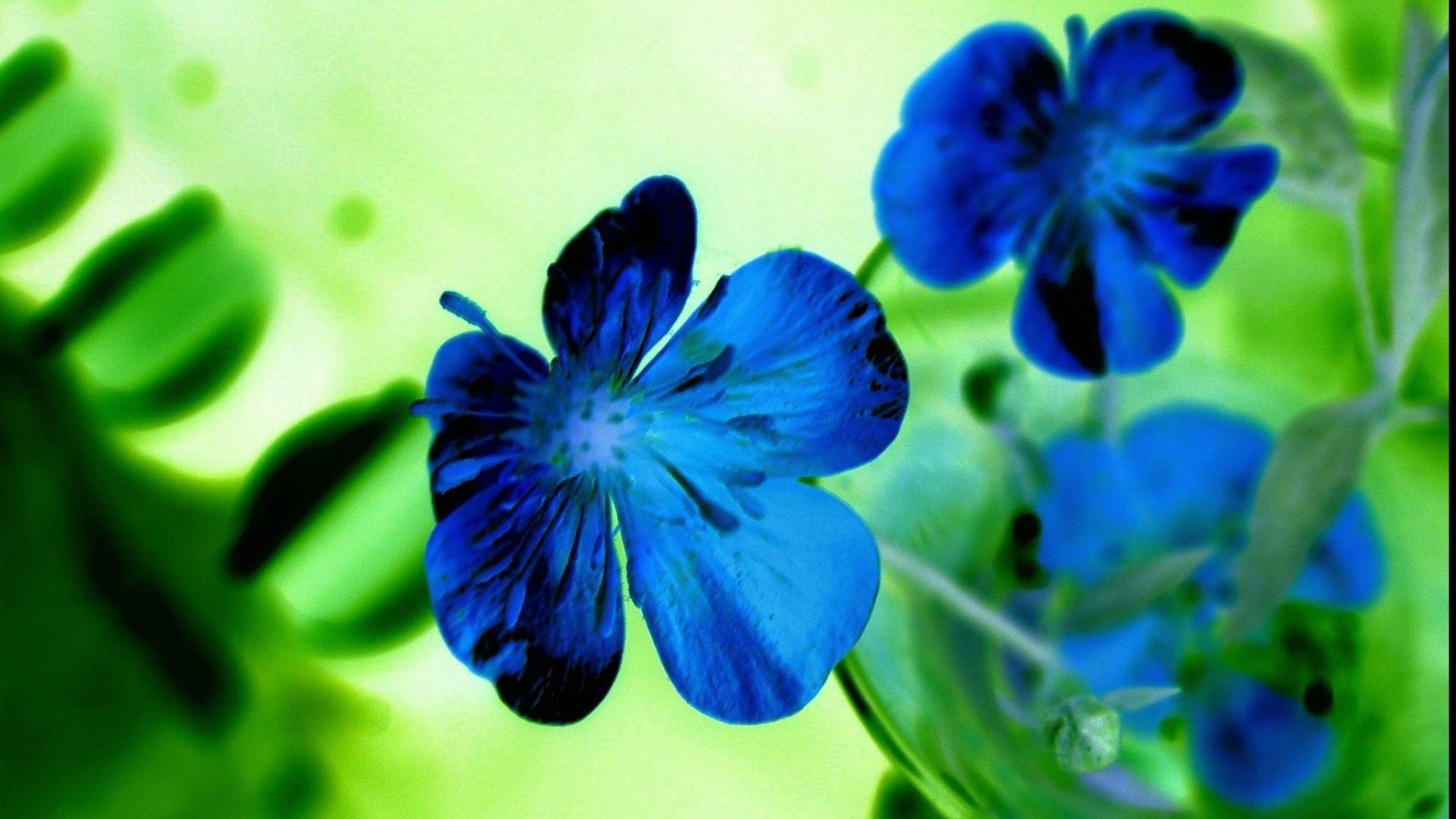 Blue Flowers Hd Wallpapers 24 High Resolution Wallpaper
