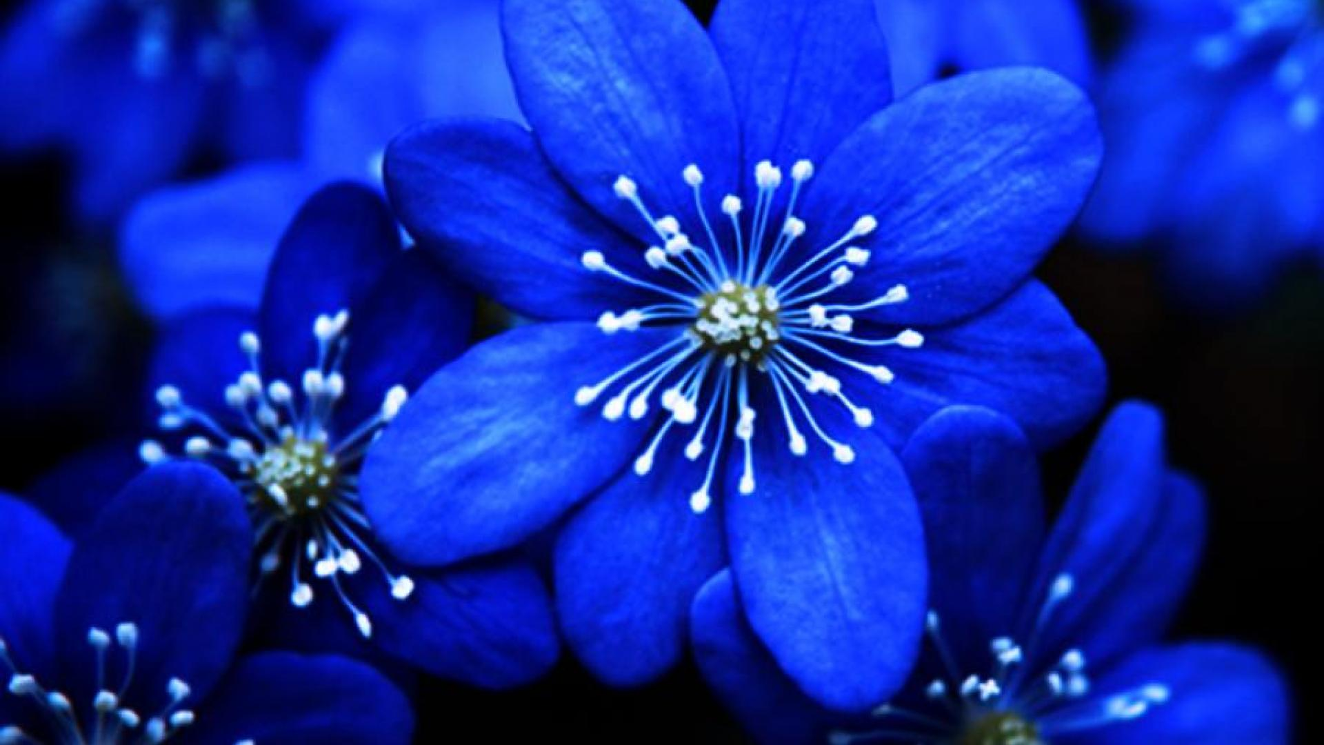 Group of purple blue flower hd best 25 blue flower names ideas on pinterest blue names blue izmirmasajfo
