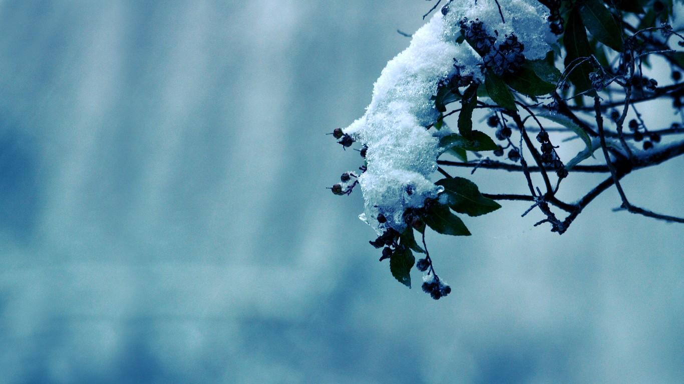 Blue Flowers In Season 32 High Resolution Wallpaper