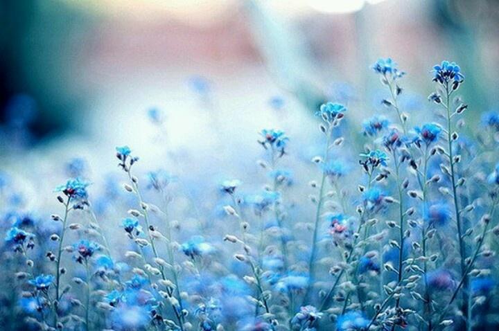 Blue Flowers On Pinterest 1 Hd Wallpaper ...