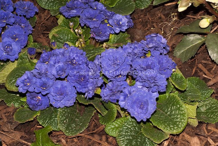 Blue flowers perennials 17 widescreen wallpaper hdflowerwallpaper blue flowers perennials 17 widescreen wallpaper mightylinksfo
