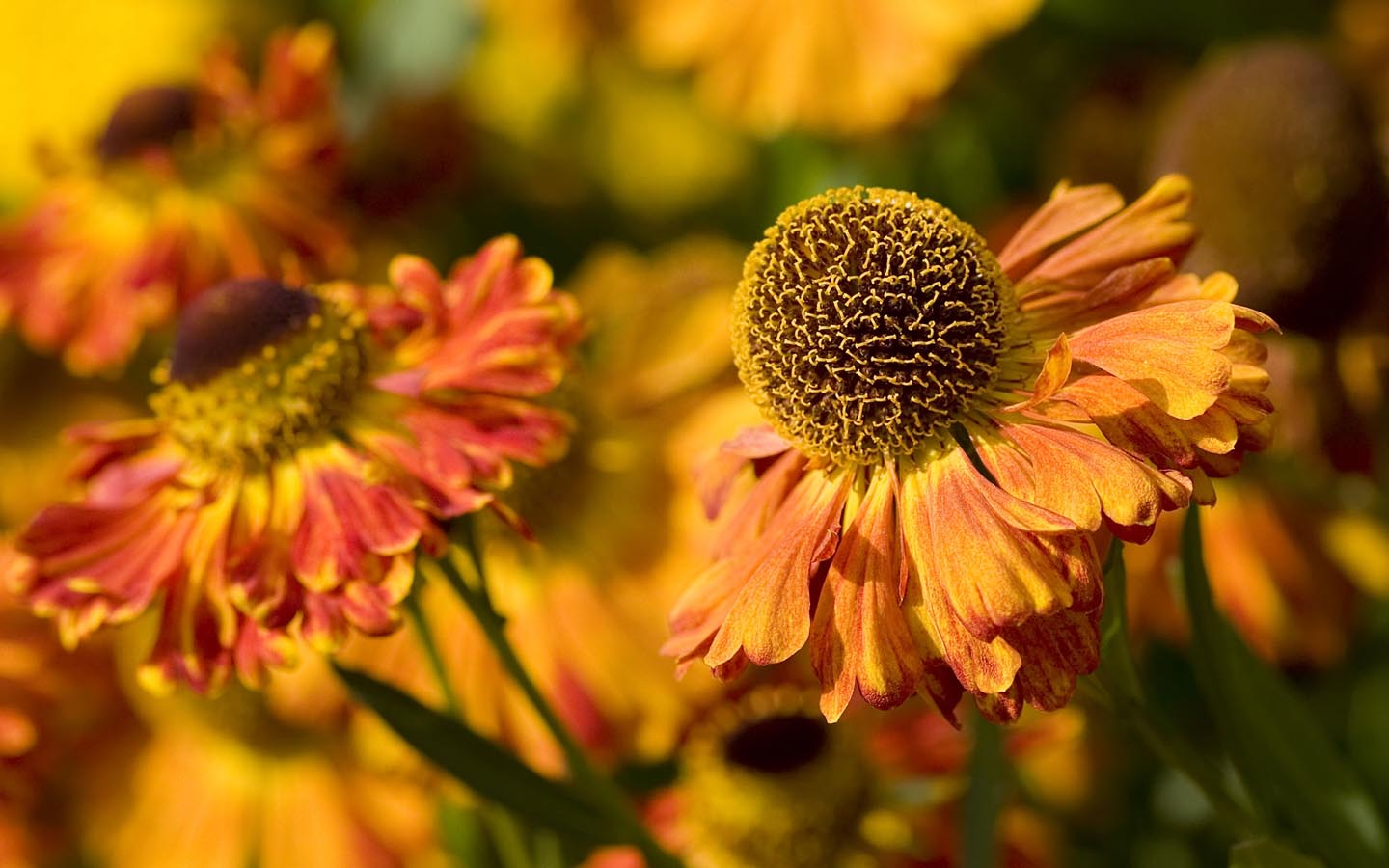 fall flowers wallpaper by - photo #16