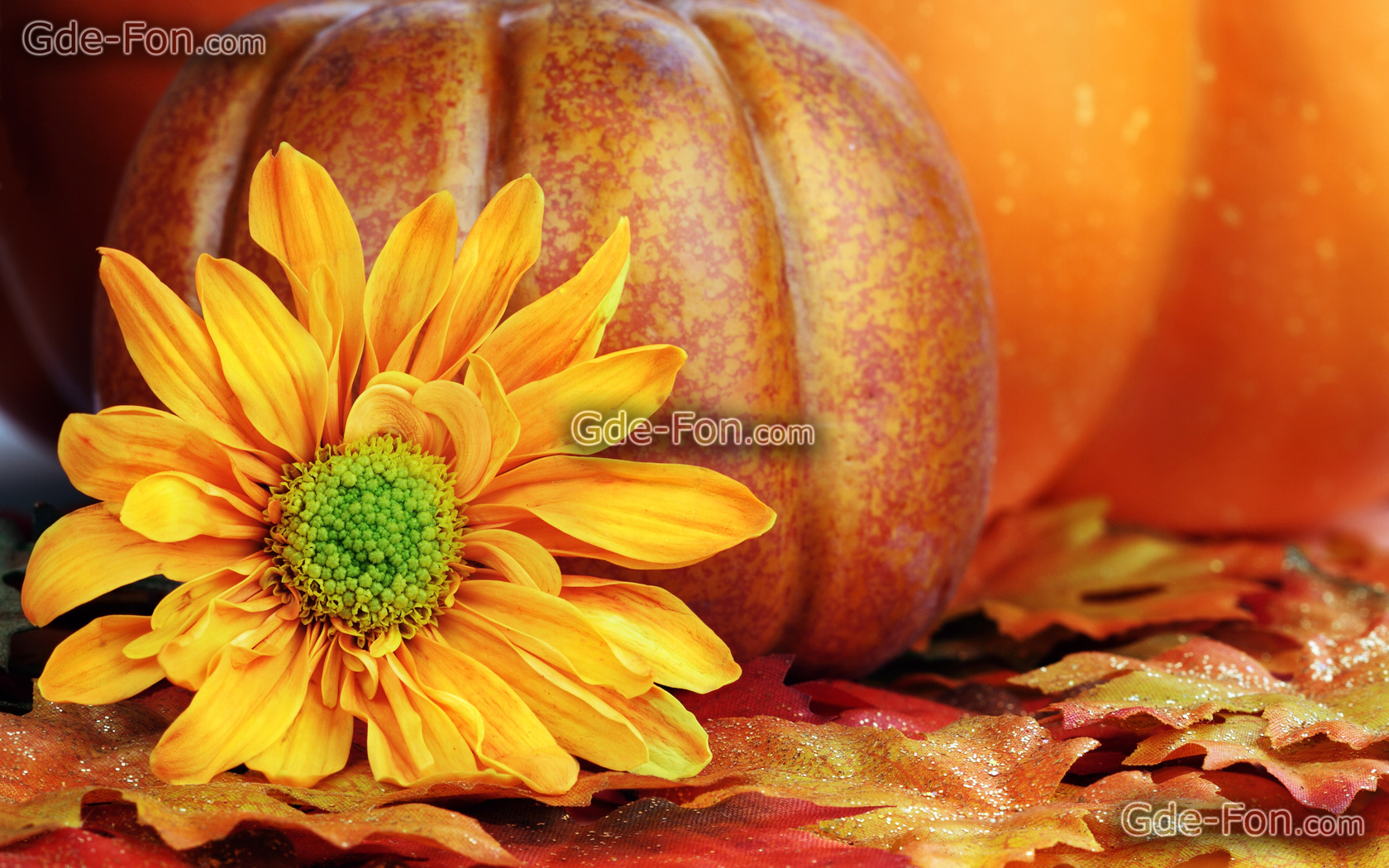 fall flowers wallpaper by - photo #2