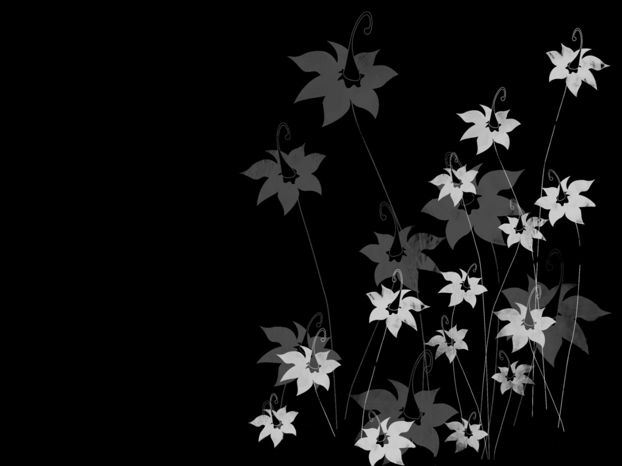 Flowers On Black Background Wallpaper 14 Hd Wallpaper ...