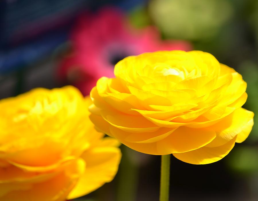 Names Of Yellow Flowers 40 Cool Wallpaper