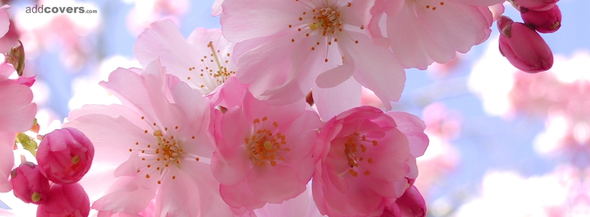 Pink Flowers Cover Photos For Facebook 1 Cool Hd Wallpaper