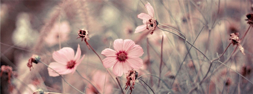 Pink Flowers Cover Photos For Facebook Free Wallpaper