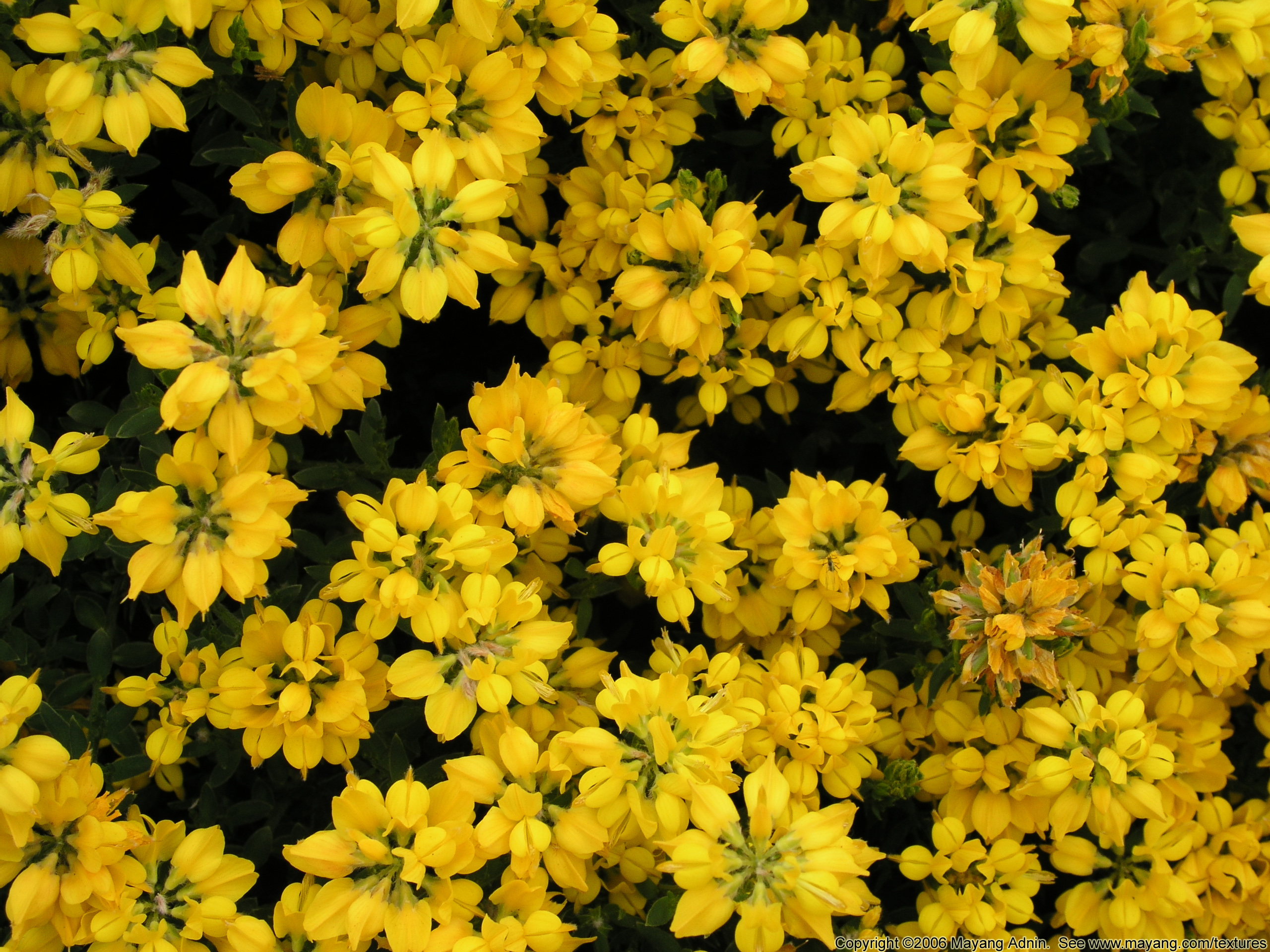 Plants with yellow flowers 17 cool wallpaper hdflowerwallpaper plants with yellow flowers free wallpaper mightylinksfo