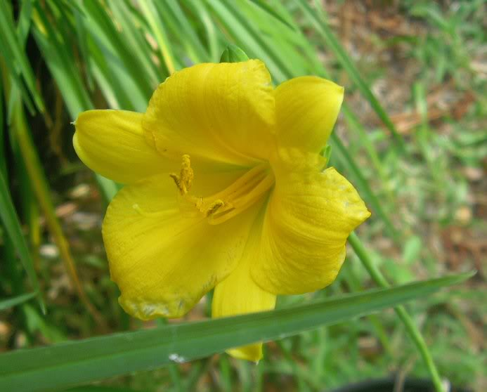 Plants with yellow flowers 18 free wallpaper hdflowerwallpaper plants with yellow flowers free wallpaper mightylinksfo