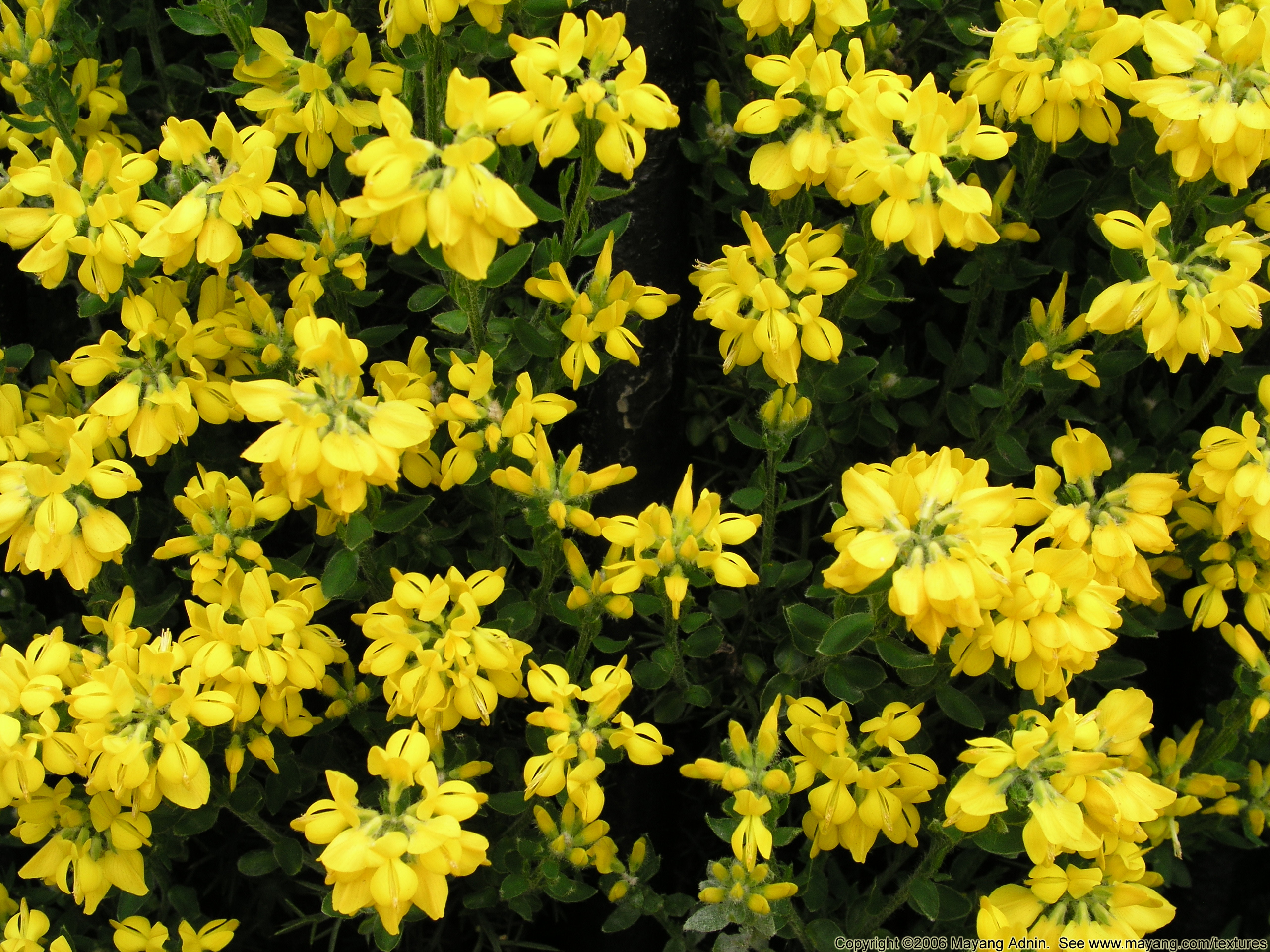 Plants with yellow flowers 25 high resolution wallpaper plants with yellow flowers hd wallpaper mightylinksfo