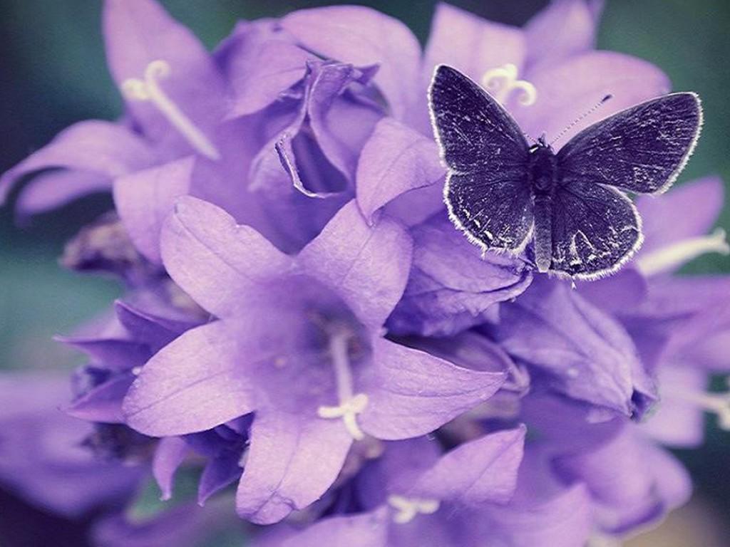 Purple Flower Wallpapers Hd 18 Background Wallpaper