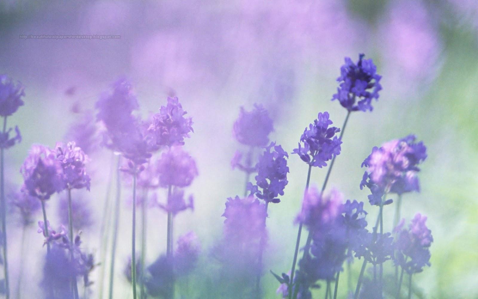 Purple Flower Wallpapers HD Wide Wallpaper