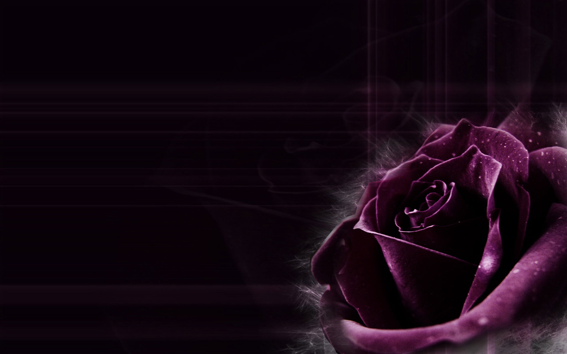 Purple roses wallpaper 15 hd wallpaper for Purple makes you feel
