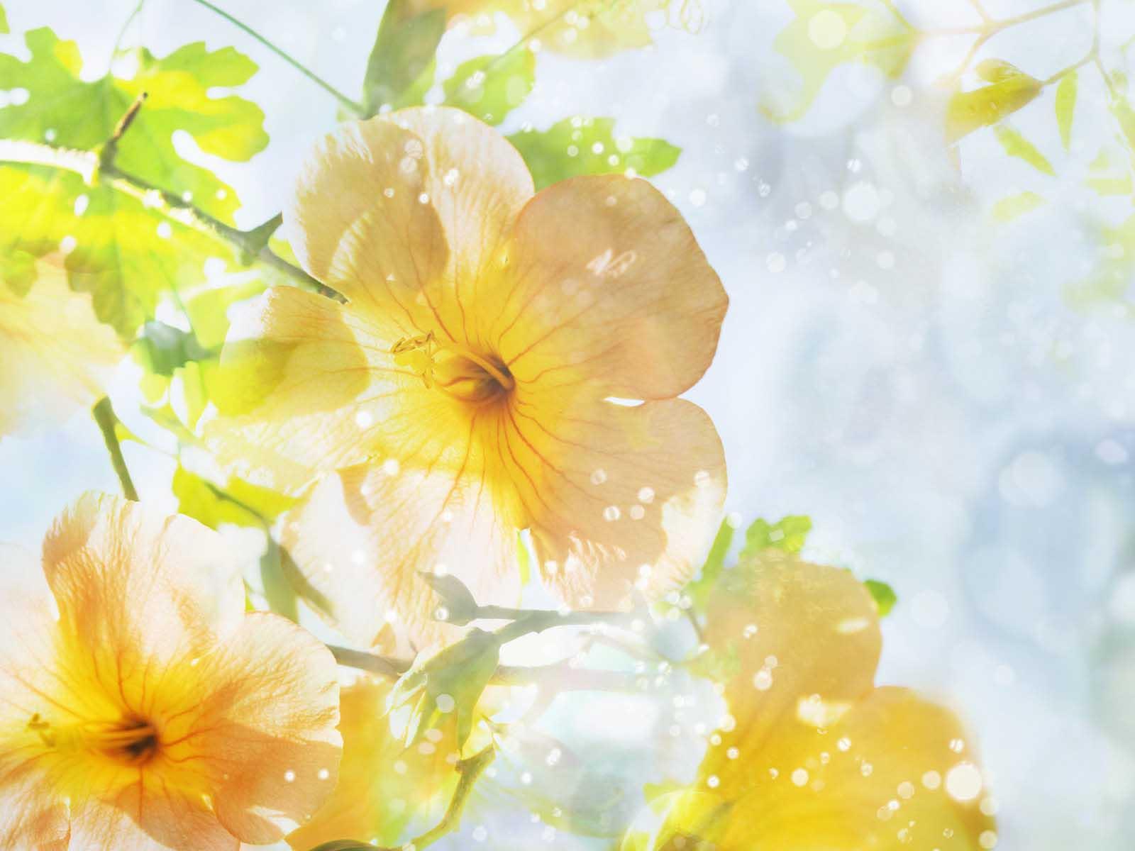 Convert View Source Ged On Summer Flowers Wallpaper Desktop 10 Background Hdflowerwallpaper