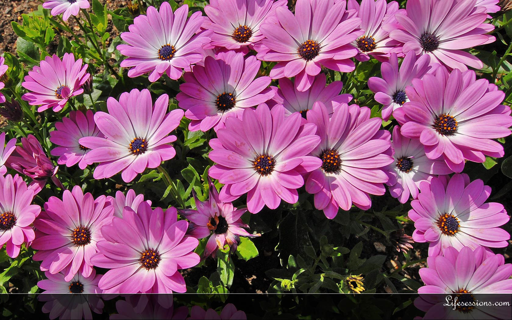 Summer Flowers Wallpaper Find Your