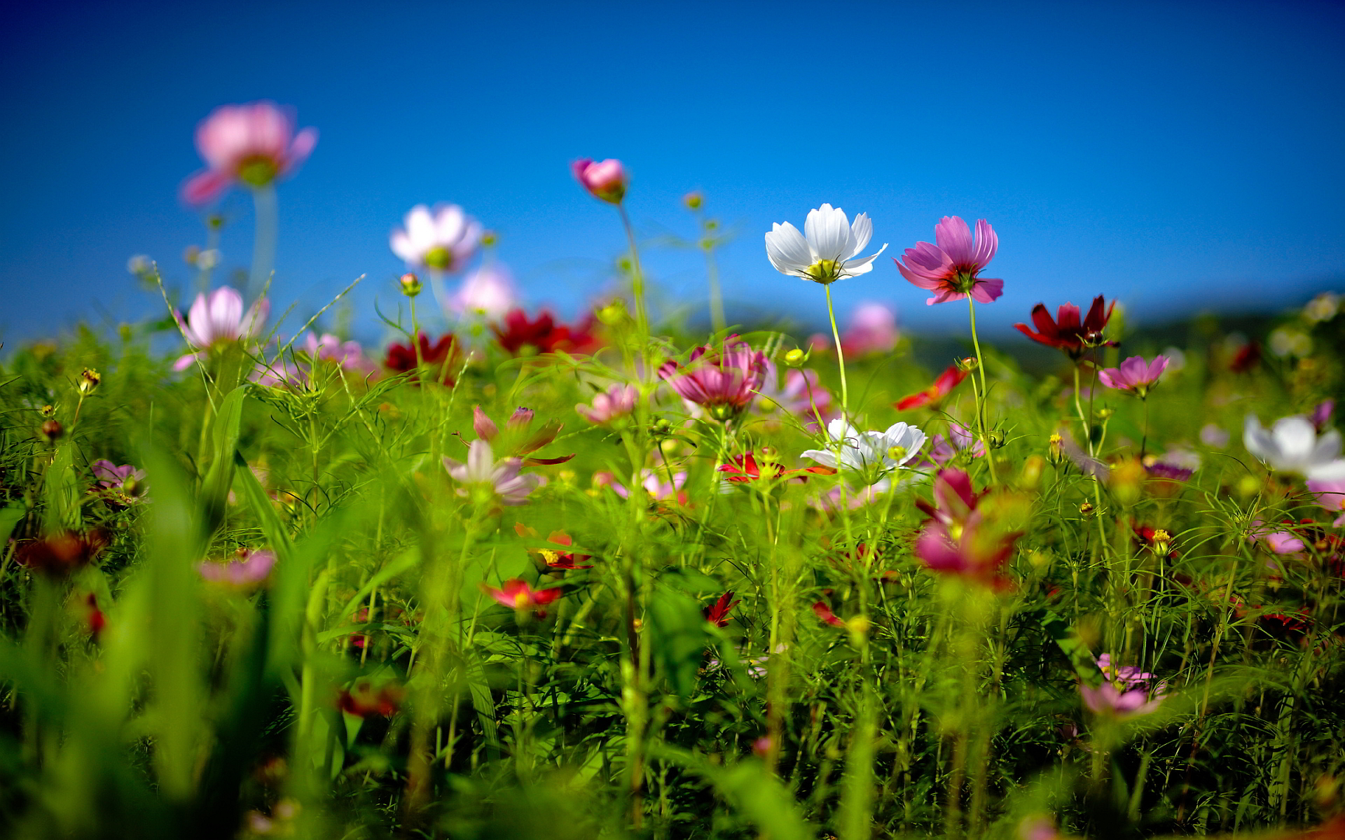 Summer Flowers Wallpapers Download at