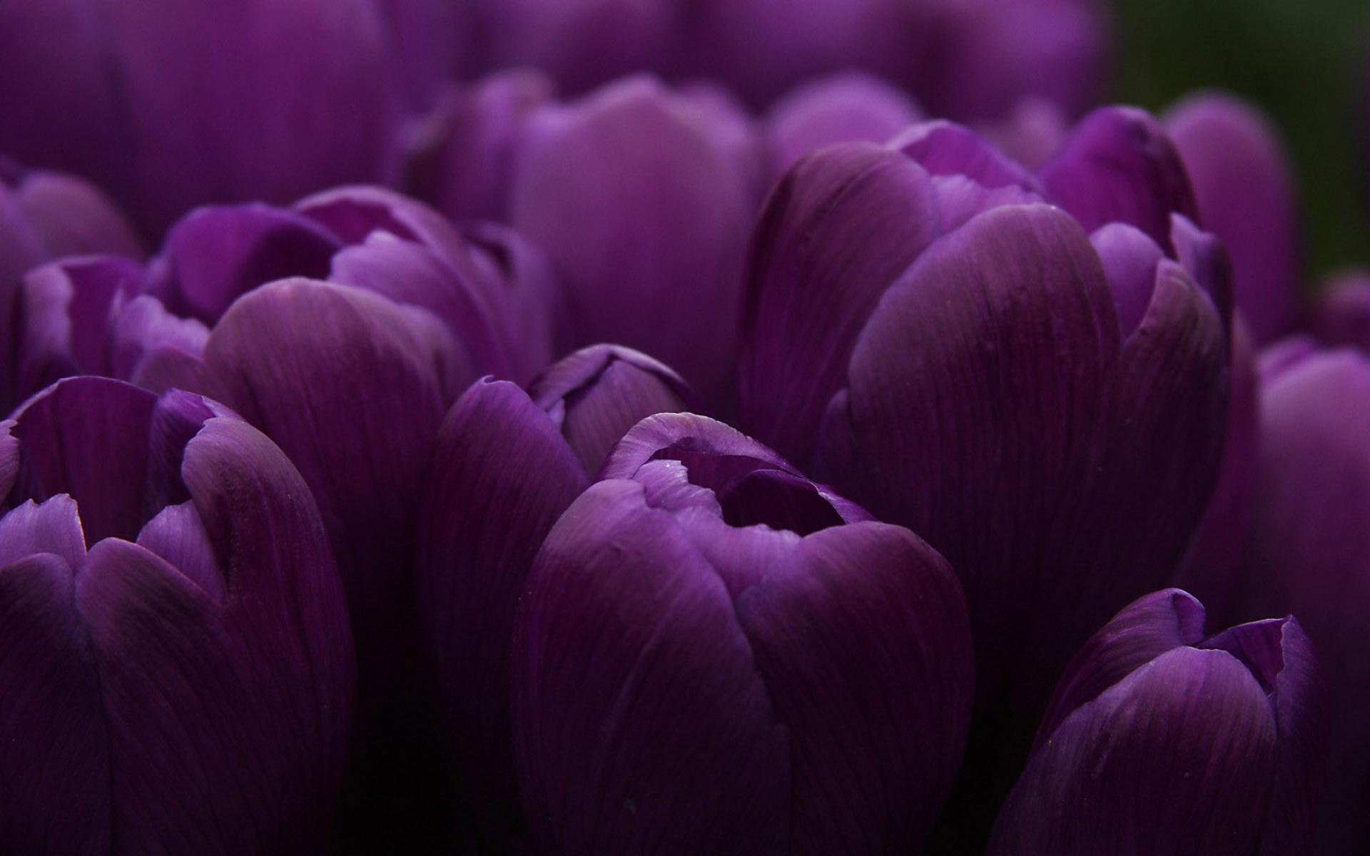 purple wallpaper 3 - photo #25