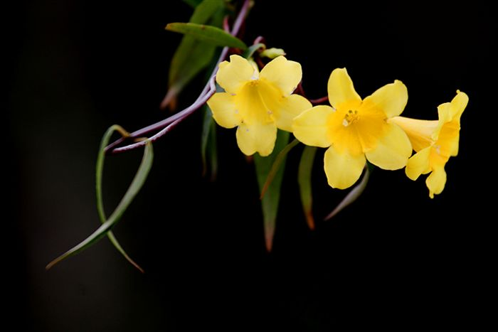 Types of yellow flowers 49 free hd wallpaper hdflowerwallpaper types of yellow flowers free wallpaper mightylinksfo