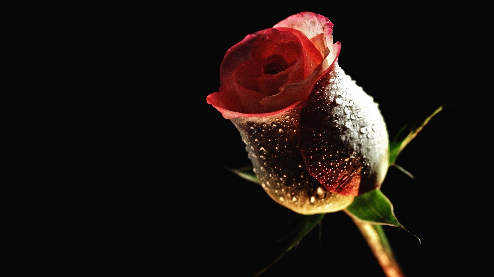 Wallpaper of flowers red rose 18 desktop background - Red flower desktop wallpaper ...